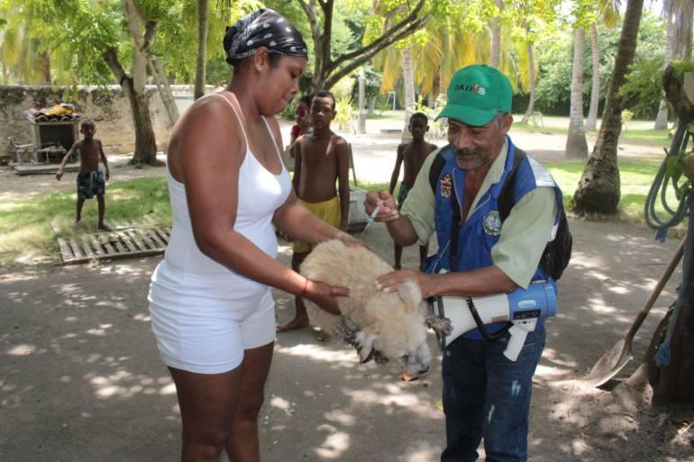 Dadis adelantó jornada de vacunación de caninos y felinos en Isla Grande: Dadis adelantó jornada de vacunación de caninos y felinos en Isla Grande
