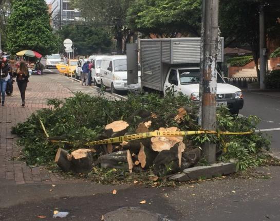 Tala árboles Bogotá: Vecinos en el norte de Bogotá denuncian más tala de árboles
