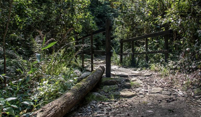 Sendero La Vieja: Después de un año reabren el sendero ecológico La Vieja