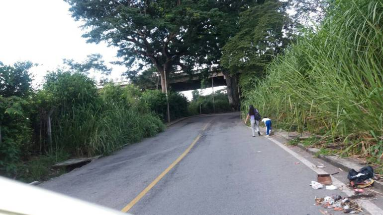 BUCARAMANGA MALEZA INVADE CARRETERA ANTIGUA: El drama cotidiano de caminar por la carretera antigua a Floridablanca