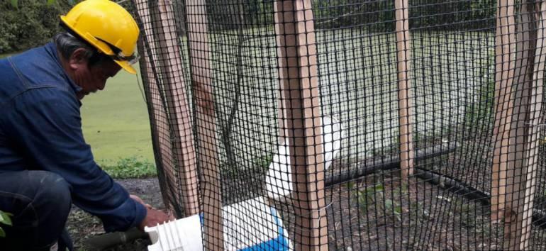 ANIMALES CAUTIVERIO AVES CDMB: Recuperan 18 aves en cautiverio