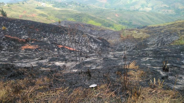 Incendio, Cerro Cristo Rey: El domingo abrazo y solidaridad por cerro de Cristo Rey