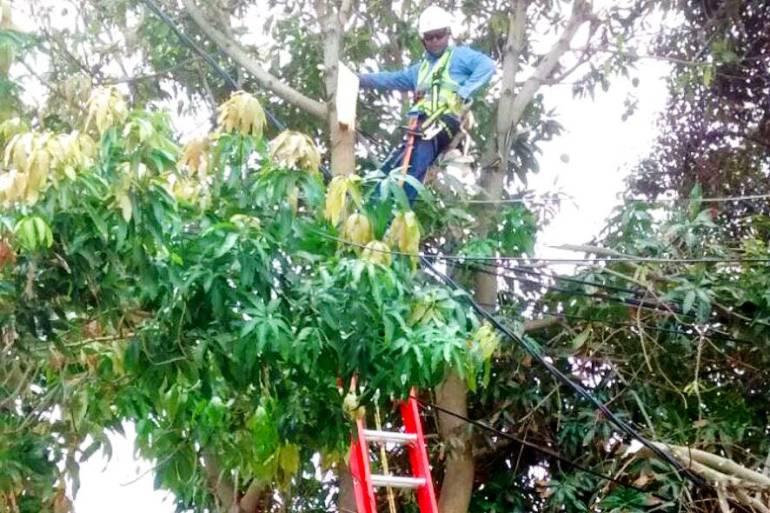 Electricaribe intensifica poda en municipios de Bolívar: Electricaribe intensifica poda en municipios de Bolívar