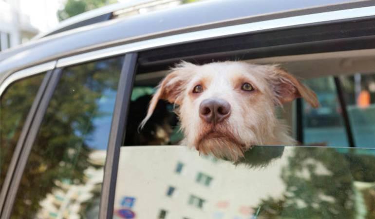 Mascotas podrán ser transportadas en los vehículos de servicio público