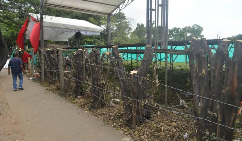 Tala de árboles en Bogotá.: 'Tatequieto' de la Personería a la tala de árboles en Bogotá