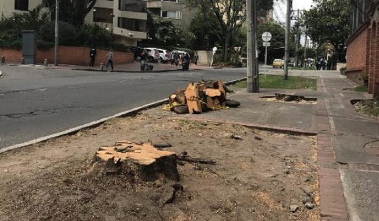 Tala de árboles.: Indagación preliminar de la Personería por tala de árboles en Bogotá