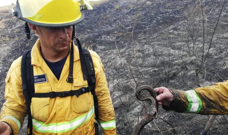 Incendio forestal: Bomberos combatieron incendio forestal en Dapa, corregimiento de Yumbo
