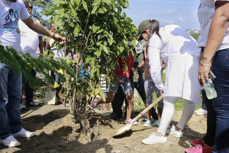 #SeMueveCartagena: Alcaldesa y jóvenes en riesgo siembran 80 árboles en el cerro de La Popa