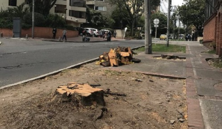 Tala de árboles en Bogotá