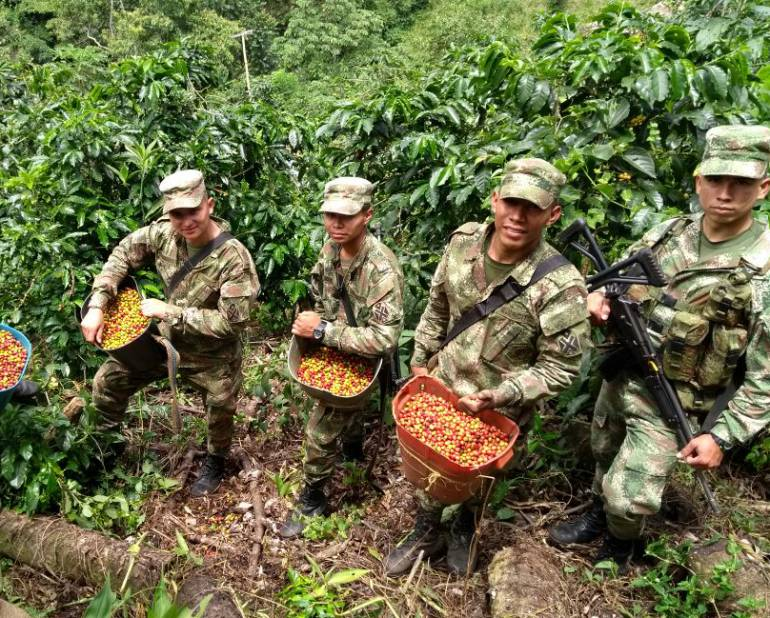 El ejército hizo un operativo en Ituango, para recolectar café
