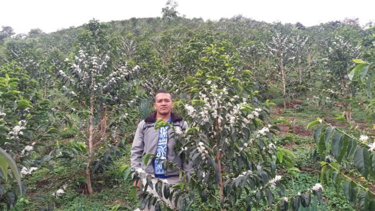Cultimos de café en el Cauca
