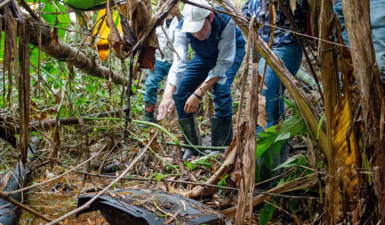 Comunidad logró frenar la tala de un guadual en Pereira: Comunidad logró frenar la tala de un guadual en Pereira