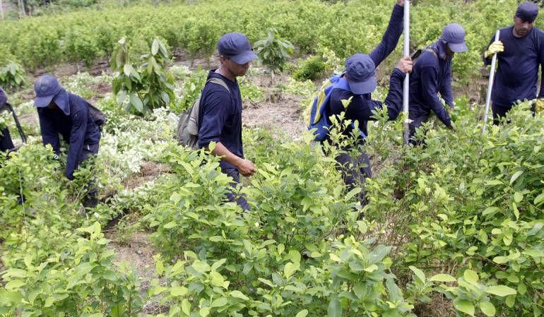 DENUNCIA DE ERRADICADORES DE CULTIVOS ILICITOS: Denuncian que los contratan para erradicar cultivos ilícitos y no les pagan