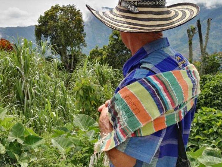 COCA, CULTIVOS, FUMIGACIÓN, CAMPESINOS, BAJO CAUCA. ANTIOQUIA.: No valoraron el esfuerzo de la erradicación manual, dicen campesinos
