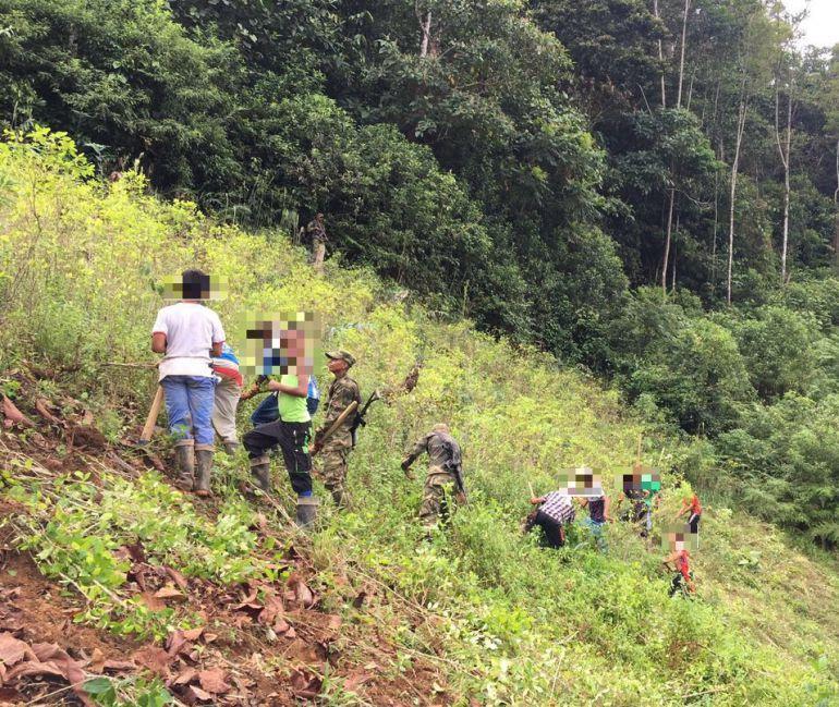 extorsiones, bajo Cauca, Caparrapos, Campesinos, erradicadores, sistución: Caparrapos extorsionan a beneficiarios de erradicación de coca