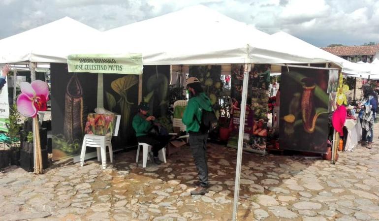 Festival del Árbol: Festival del Árbol promueve evitar uso de bolsas plásticas en Boyacá