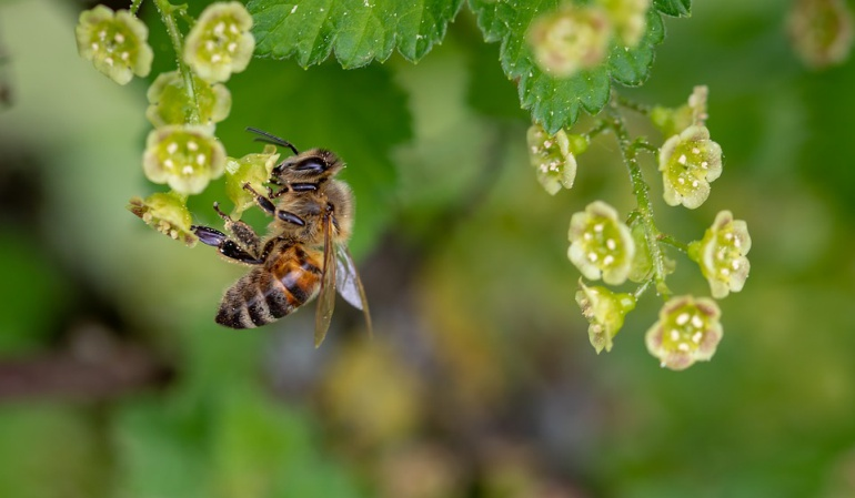 Muerte de abejas: Apicultores de Córdoba no serán indemnizados por muerte de abejas