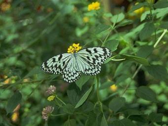 Mariposas de 20 especies batirán sus alas en el Jardín Botánico de Bogotá