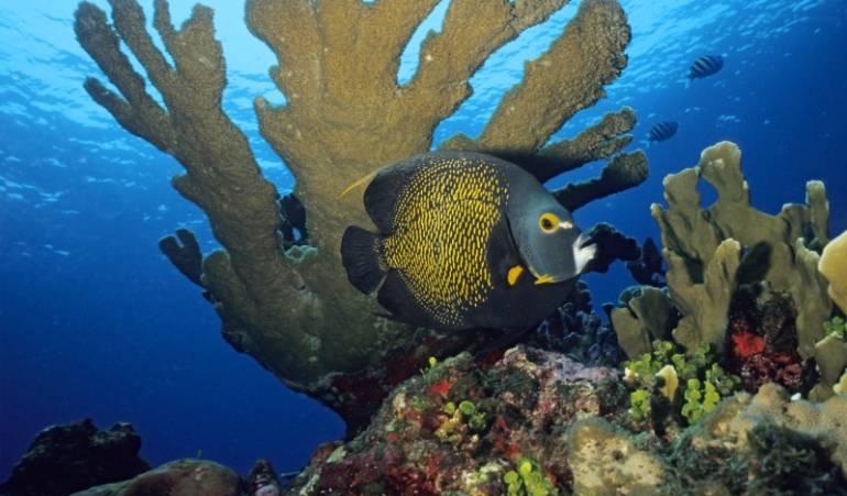 Noticias ecológicas: Países ponen en riesgo metas globales al ignorar la pérdida de biodiversidad