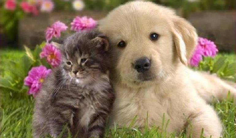 Lo Más Caracol: Refugio para mascotas vulnerables