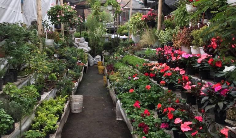 Lo Más Caracol: Plantas exóticas para tener en casa