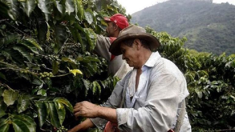 Cultivo de café en Colombia