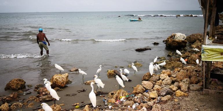En las playas de Cartagena todas las mañanas estas aves esperan a los pescadores porque saben que siempre traen alimento en sus chalupas.