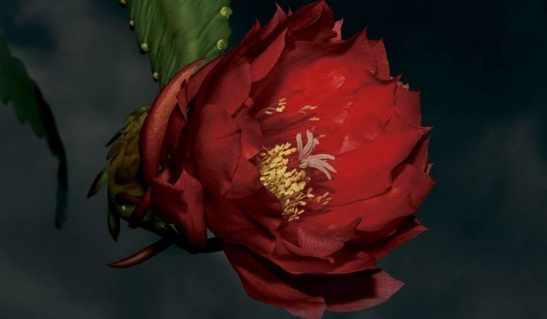 El fotógrafo de las flores Colombianas