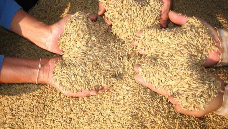 Caracol al campo Arroceros: El arroz en el mundo de la agricultura de precisión