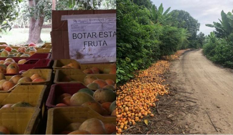 Caracol Al Campo mangos Colombia: Por sobreproducción, el mango se está pudriendo en Magdalena