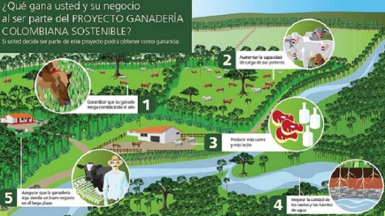 Al Campo ganado Colombia: La ganadería sostenible, una realidad en Colombia