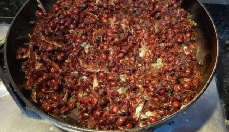 Hormigas culonas listas para comer