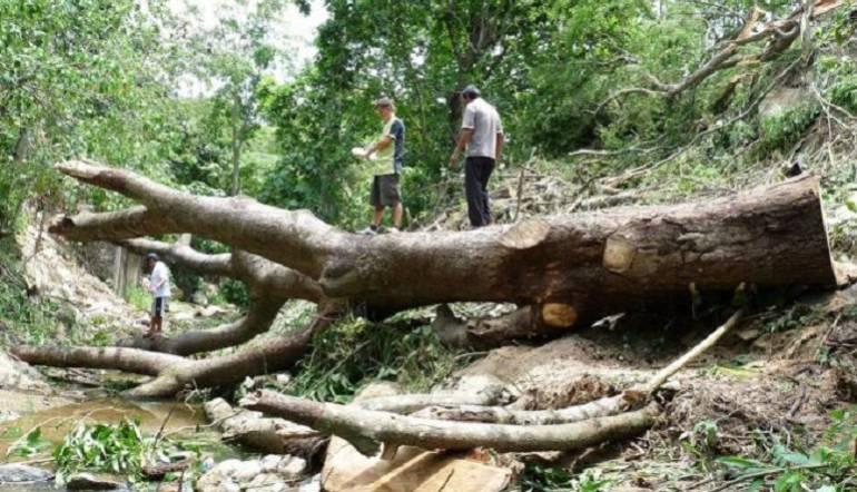 Al Campo control forestal: ICA impulsa el control de plagas en la producción forestal