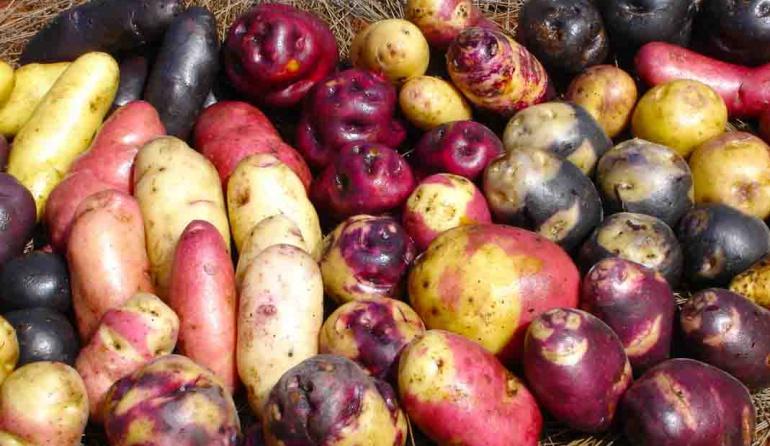 patatas nativas: Papas ancestrales, una joya que los colombianos poco conocemos