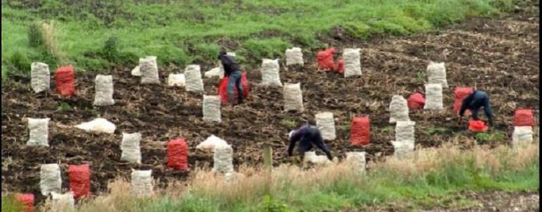 Ergonomía para el campo: ¿Cómo hacer más fácil el duro trabajo en el campo?