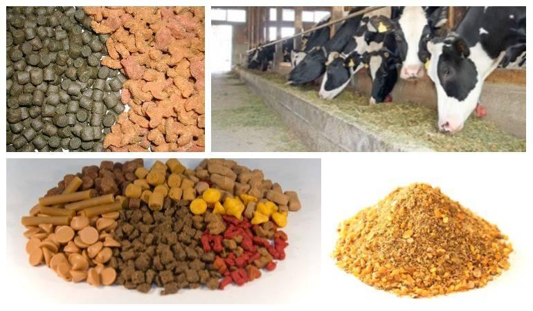 Alimentos concentrados para animales