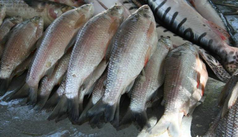 Consuma más pescado