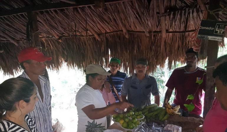 Campesinos de Montes de María ahora cultivan la tierra