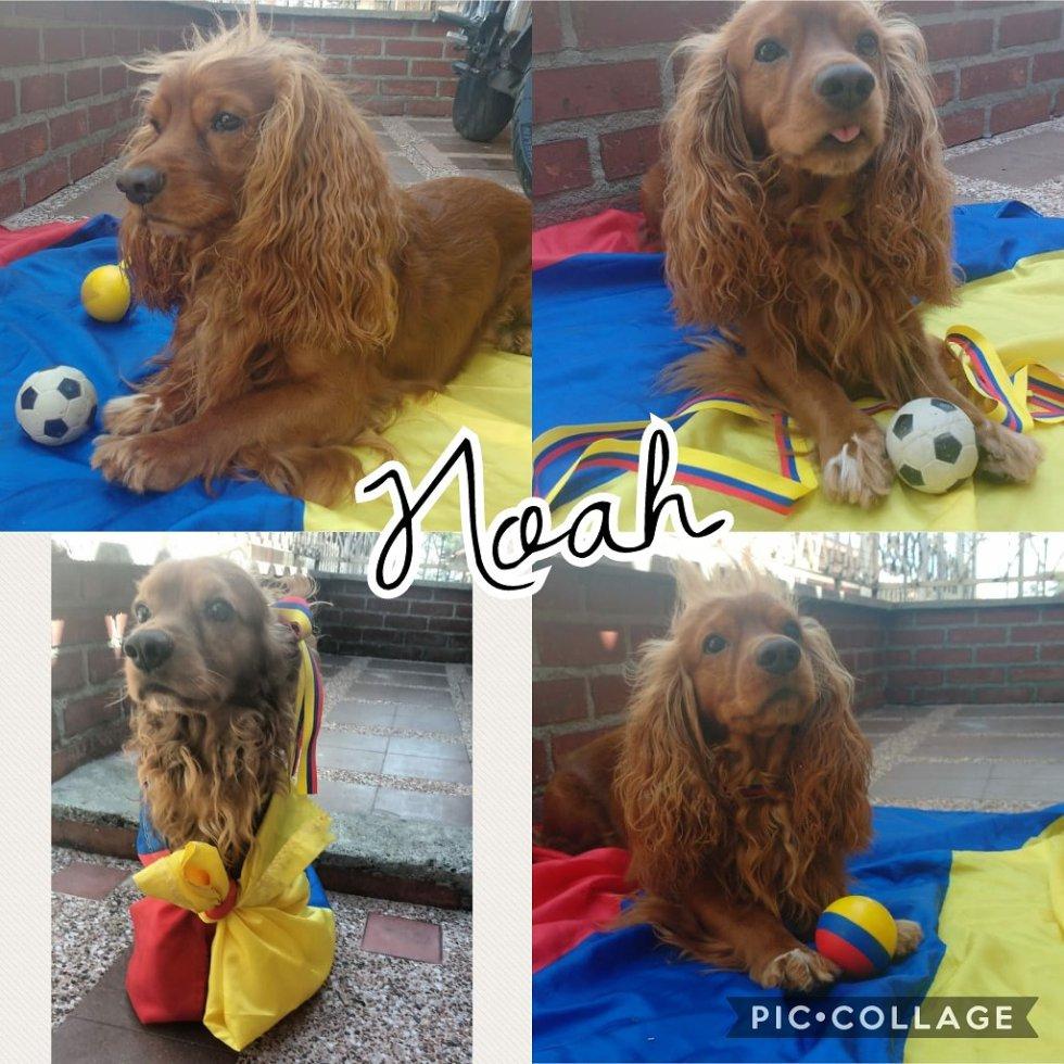 Diego Marín nos mandó la foto del hincha número 1 de la selección Colombia, Noah