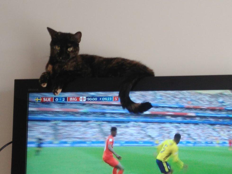 Felipe Duarte nos envió la foto de Tila su gata que disfrutó el mundial desde otra perspectiva