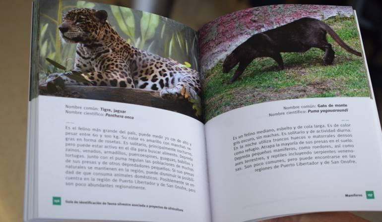 Guía de Identificación de Fauna Silvestre asociada a proyectos de Silvicultura