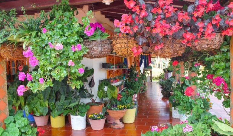 """65 variedades de flores en la Finca """"El Pensamiento"""""""