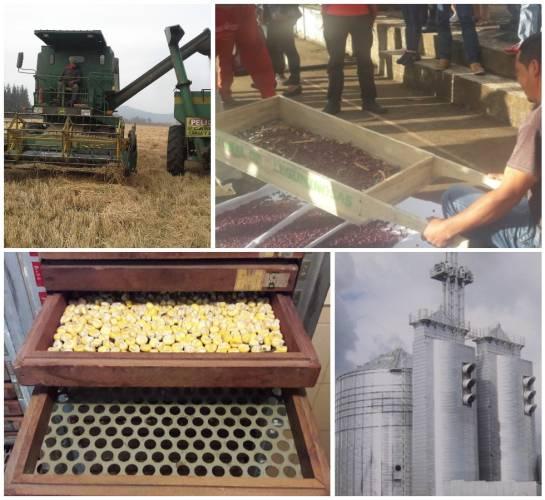 Fenalce granos: Así se cuidan los granos de cereales y leguminosas, llamados perecederos
