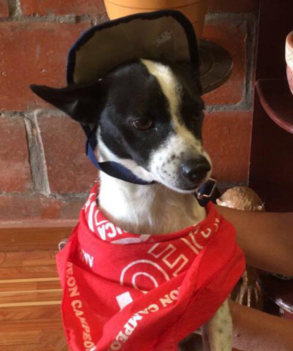 Julián Yepes envío la foto tipo documento de Manchitas un hermoso perrito adoptado