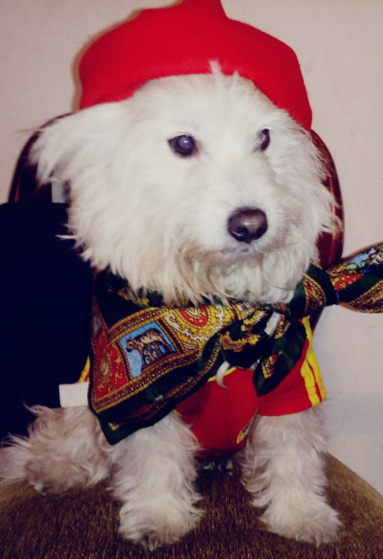 Sandra Cortez nos manda la foto de Tomás un perro muy elegante