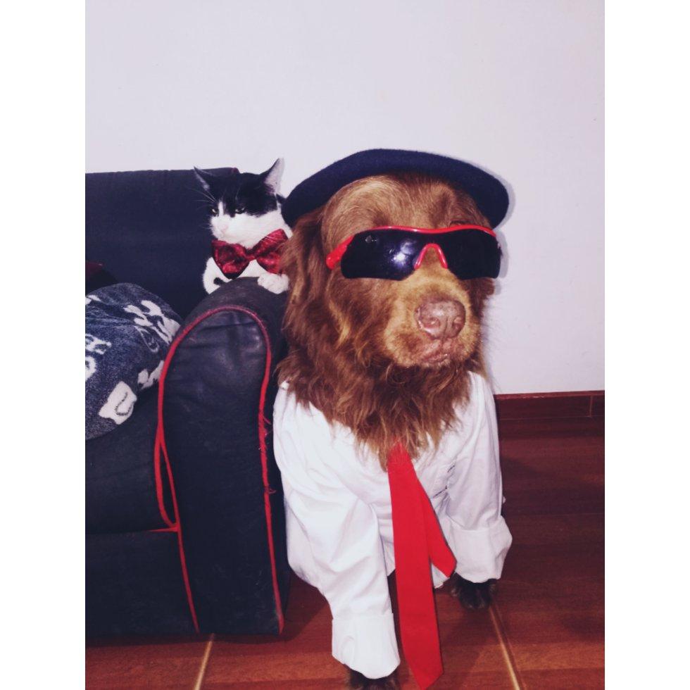 María Laroja nos envió la foto de Toreto un hermoso perro