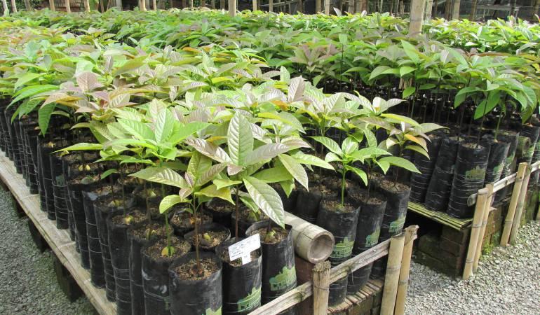 Viveros - material vegetal de propagación