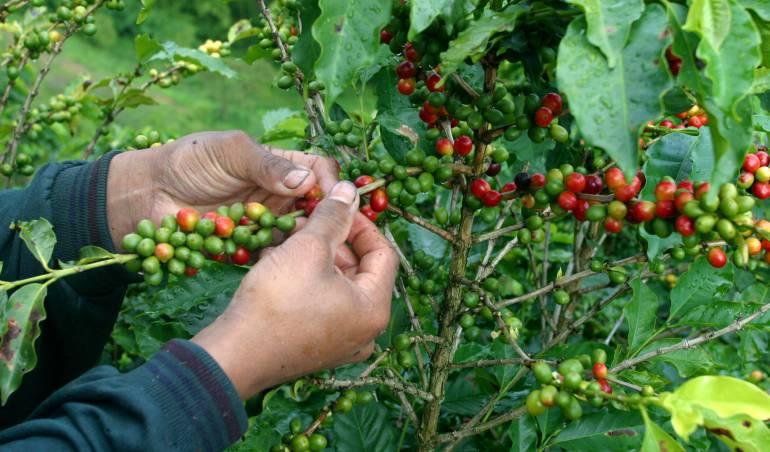 Listografía: Día internacional del Café