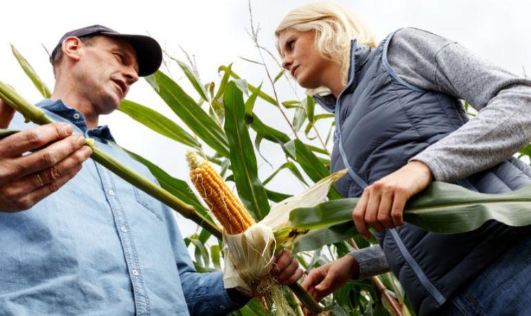 Fertilizantes: Fertilizantes, los alimentos de nuestro alimento