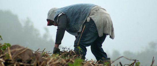 Ministro Agricultura Andrés Valencia: Este 2019 es muy prometedor para el campo